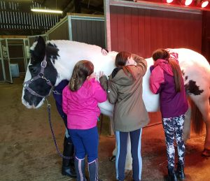 riding club wiltshire at rein and shine