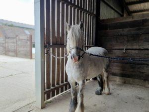 loan my horse